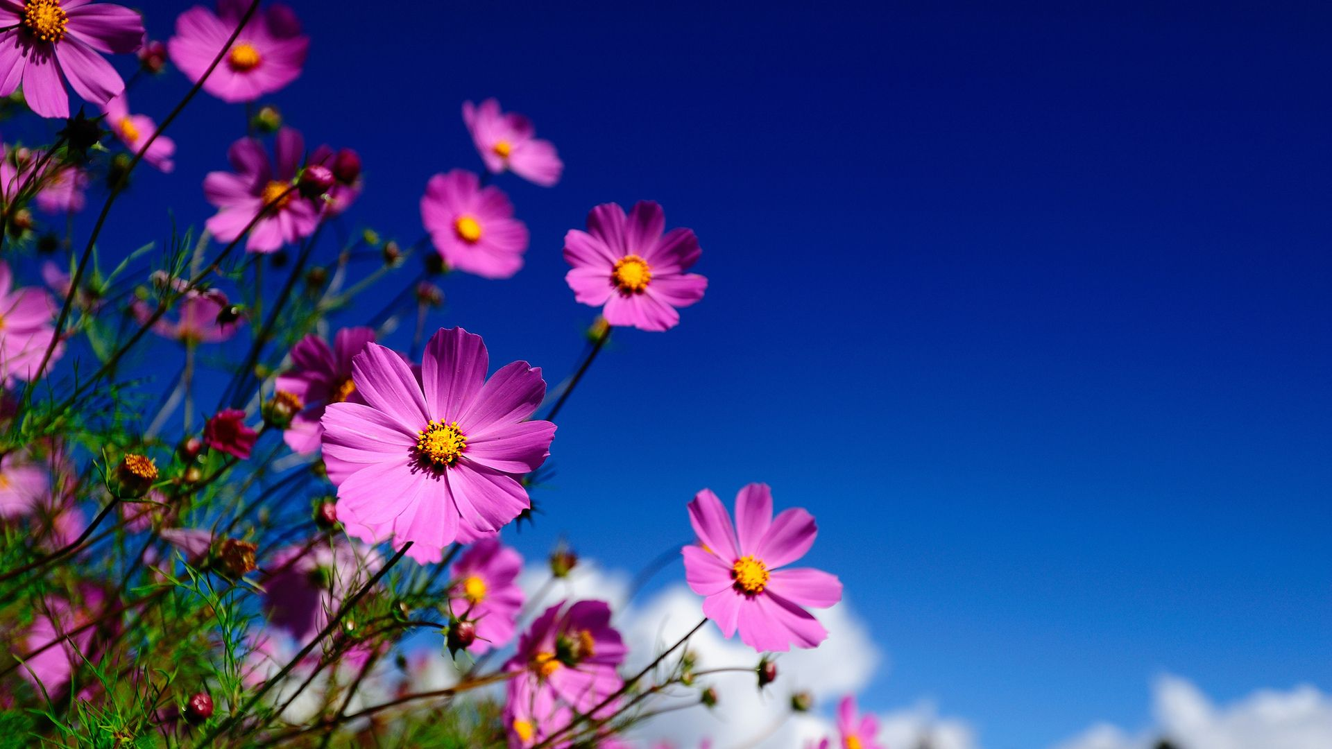 Flowers Cvety Oboi Dlya Rabochego Stola Kompyutera Oboi