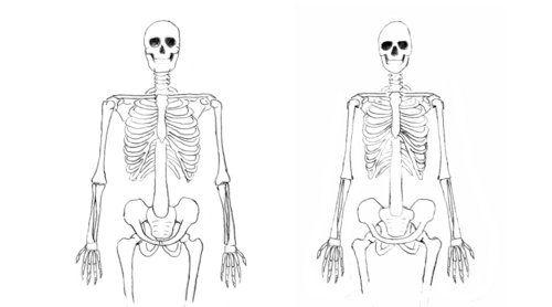 male-female-skeleton.jpeg 500×278 pixels | Differences Between ...