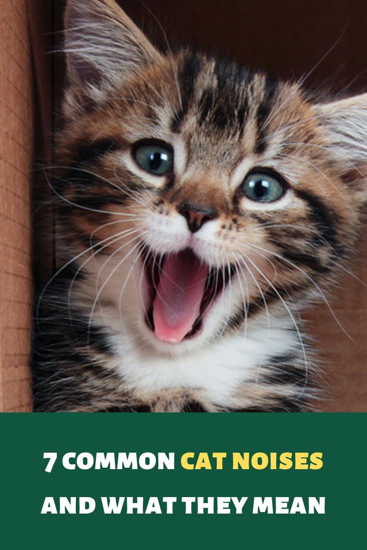 What Do Different Cat Sounds Mean Cat Noises Cats Cat Yowling