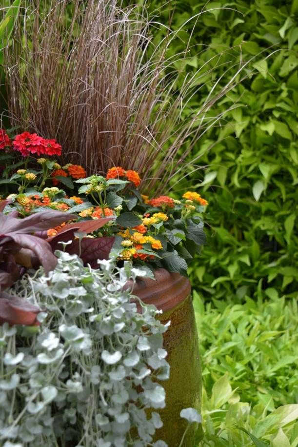 Use distinctive Foliage accent plants as spillers, fillers and thrillers to complement all types of flowering plants. Read more how Leaves Can Add Dazzle to your garden.