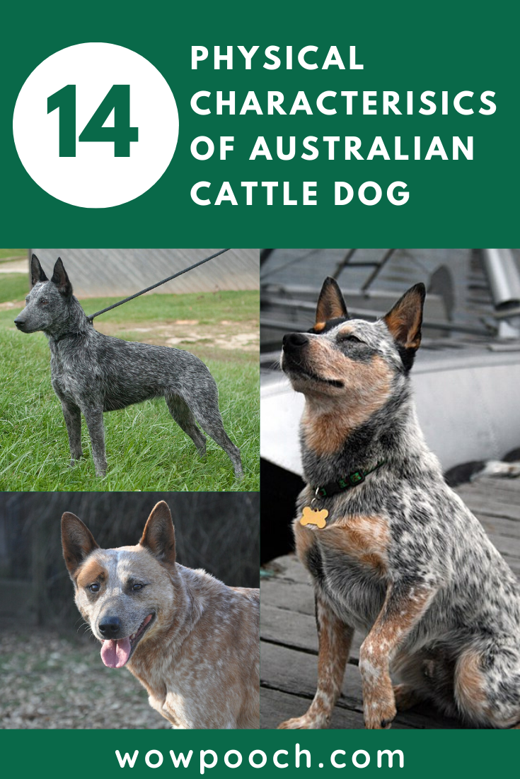 Australian Cattle Dog Property Laws Magnet Personalized With Your Dog S Name Cattle Dog Australian Cattle Dog Blue Heeler Dogs