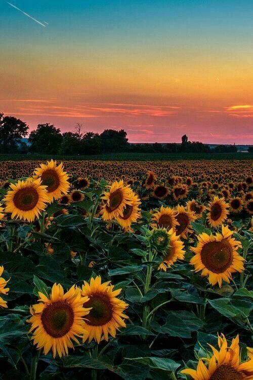 Just Love This View Pictures Landscapes Etc Fondos De