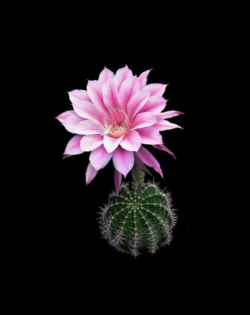 Flowers unique flowers beautiful flowers orchid cactus cactus flower - Beautiful Flowers