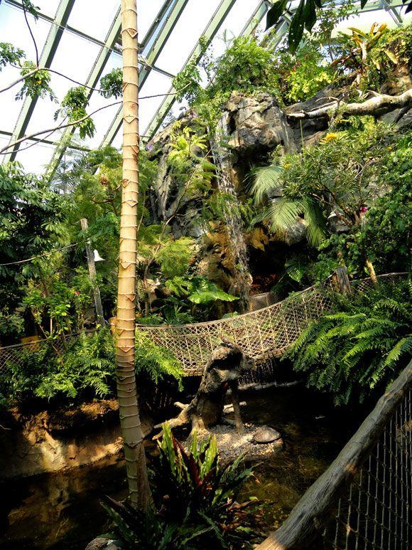Buffalo Zoo Rainforest Falls 1 Jardin Tropical Paludarium Tropical