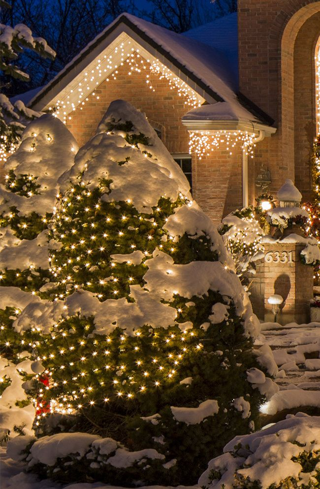 net lights and tree wraps outdoor christmas decorations pinterest christmas lights christmas and decorating with christmas lights