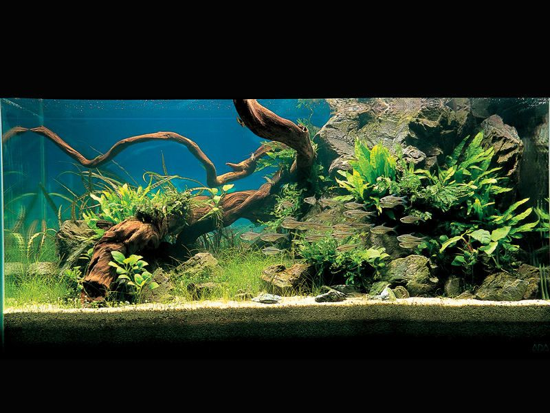 A natural fish tank this would be great with low for Low maintenance fish tank