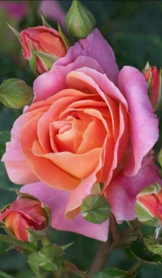 flor - Fotos De Flores Preciosas