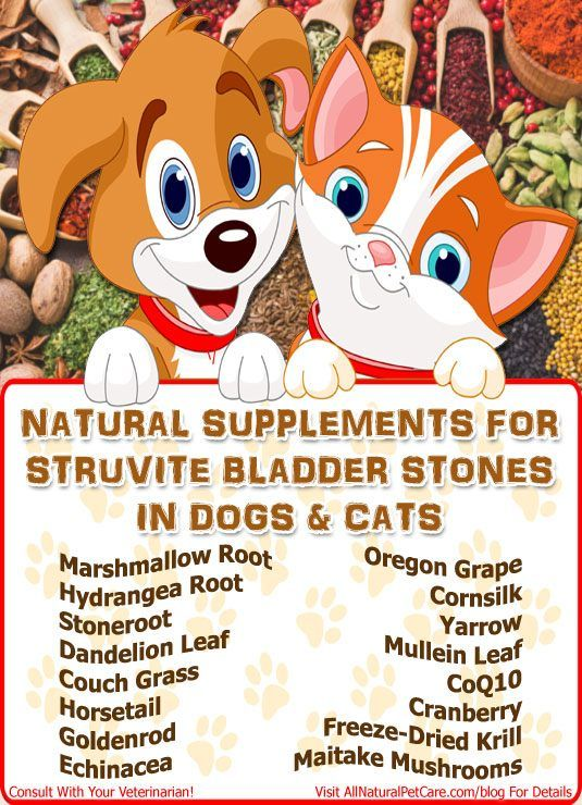 Dog Bladder Stones Home Remedy