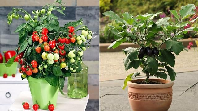 Top 10 Easy To Grow Vegetables In This Summer At Your Home 400 x 300