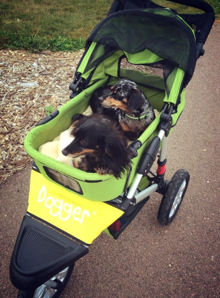 Bella And Lola Love Their Dogger Best Of Both Worlds Walk Some