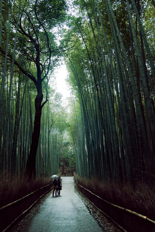 """asthmas: """"Sagano Bamboo Forest (Arashiyama, Japan) """""""