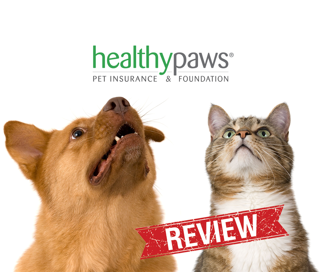 5 Steps to Finding The Best Pet Insurance Pet insurance