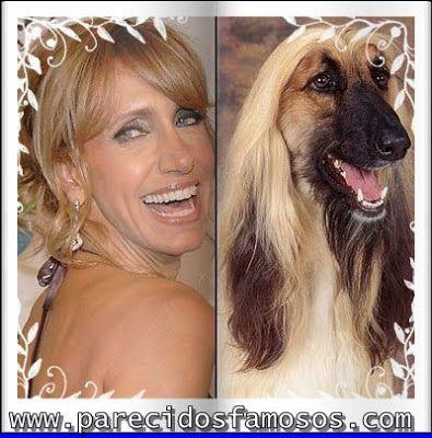 Parecidos con famosos lili estefan con perro afgano personas con animales pinterest - Animales con personas apareandose ...