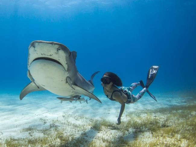 Ocean Ramsey Is The Beautiful Shark Defender You Need To
