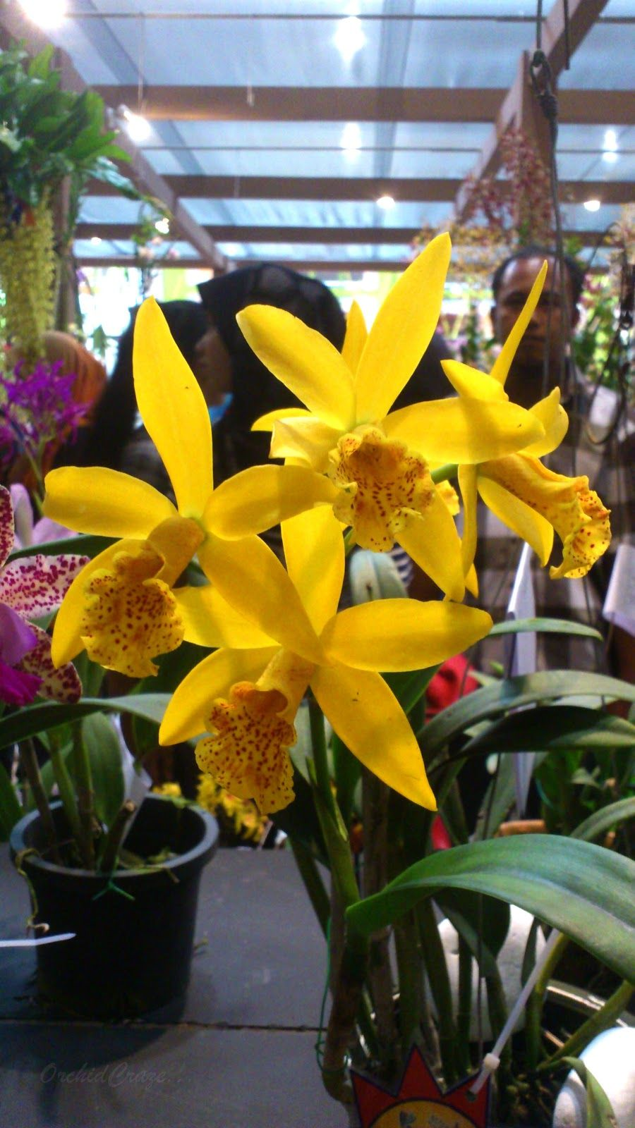 Organized by osm orchid society of malaysia date rd