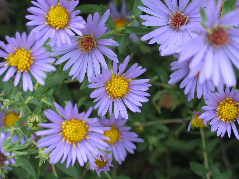 Top Plant Picks Archives Dyck Arboretum Flower Landscape October Sky Beautiful Flowers Garden
