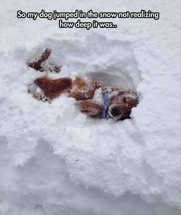 Funny Snow And Dog Pictures