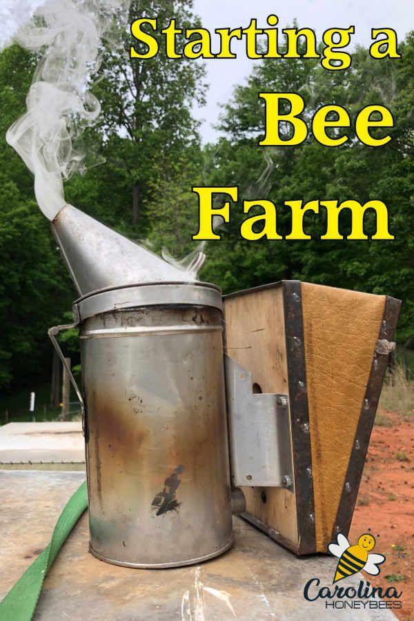 Starting a Beekeeping Business | Bee farm, Bee, Bee keeping