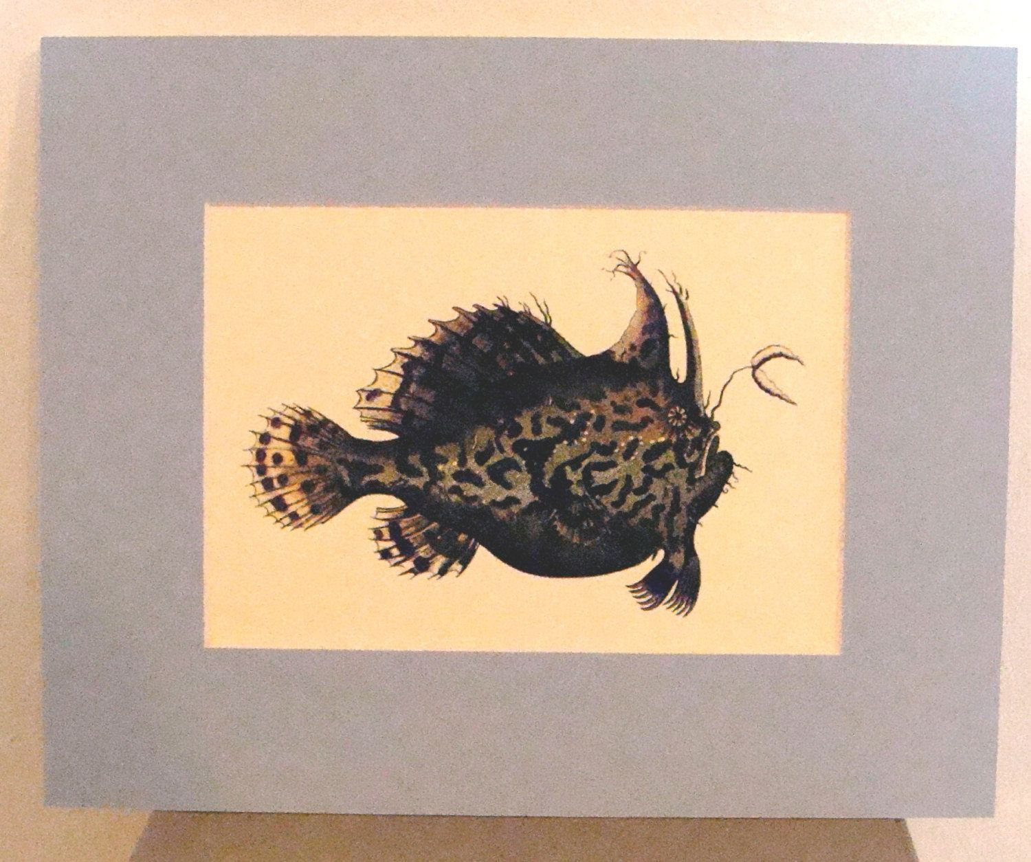 Sale 5 x 7 inch Angler Fish Matted Print Ready to Frame