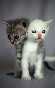 Cute Animals Rare Since Cute Cartoon Lion Animals Although Cat Having Kittens In Dream Cute Kittens Kissanpennut Sopot Kissat