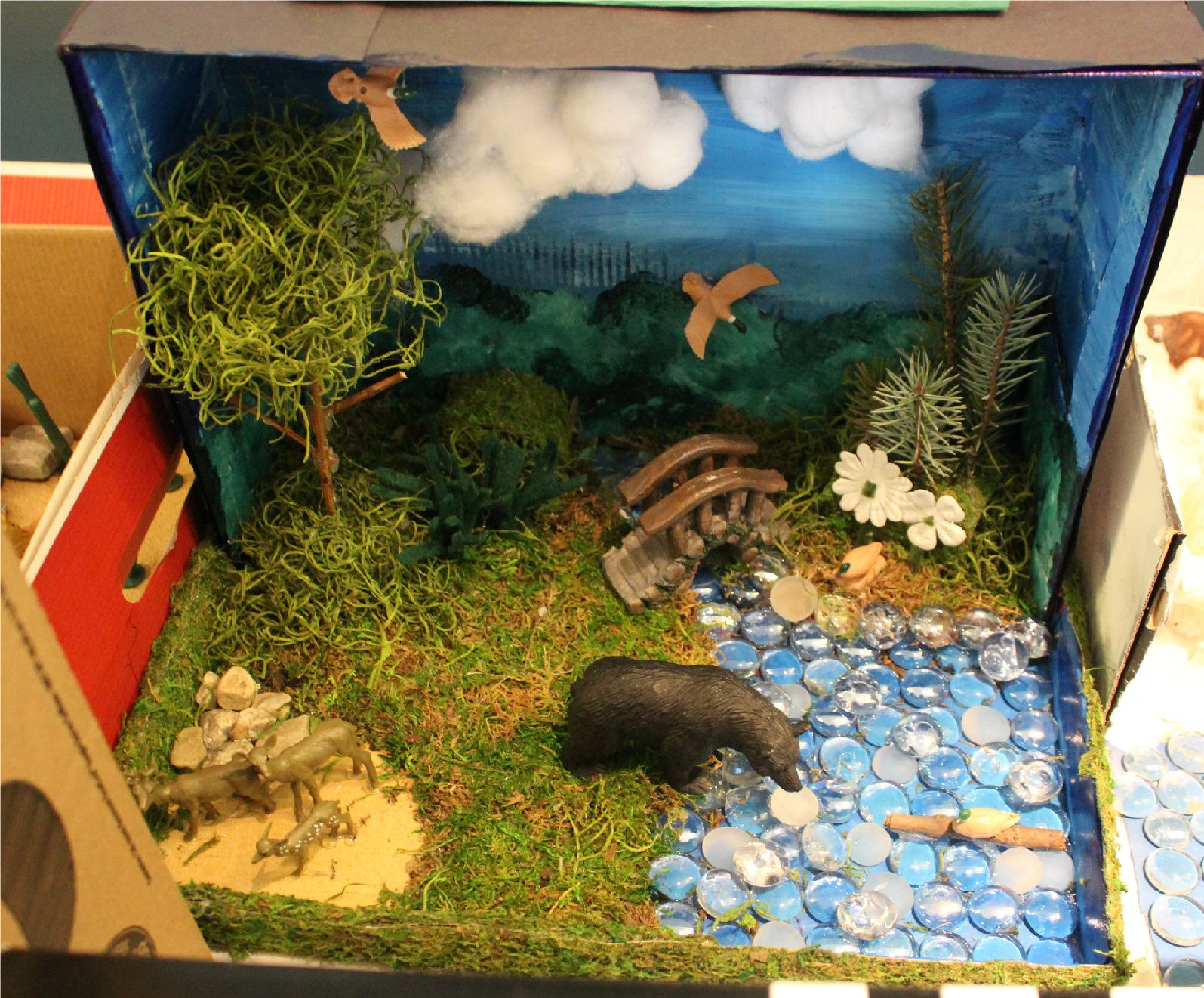 This Fourth Grade Biome Project Represents A Deciduous