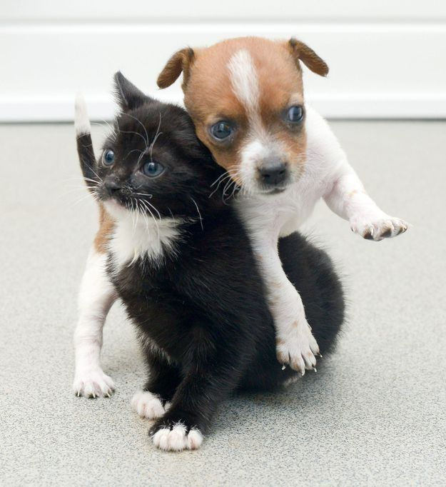 Милые и смешные картинки котят и щенят, картинки лисиц поздравить