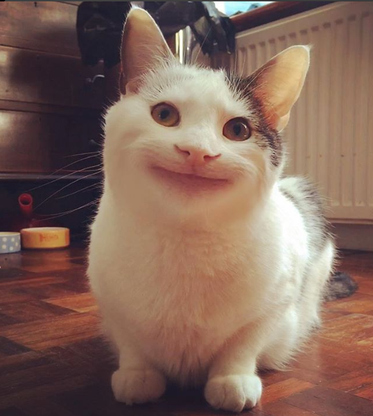 Meet Ollie, The Polite Cat With The Amazing Expression ...