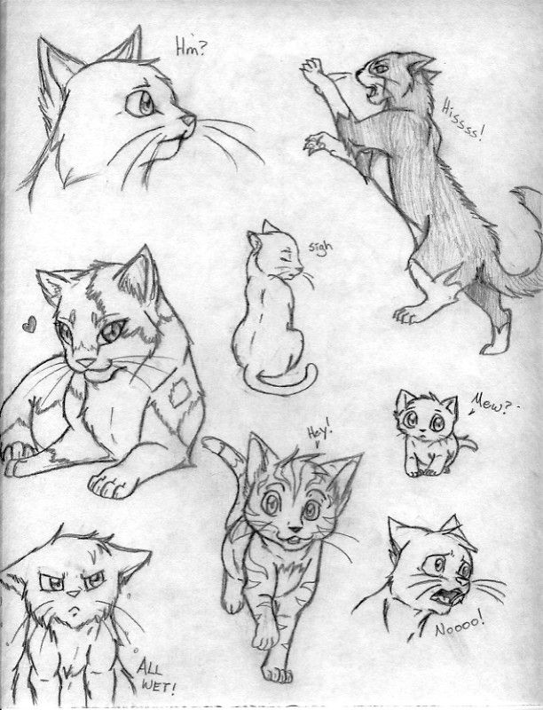 Cat Sketches Cat Sketch Sketches Animal Drawings