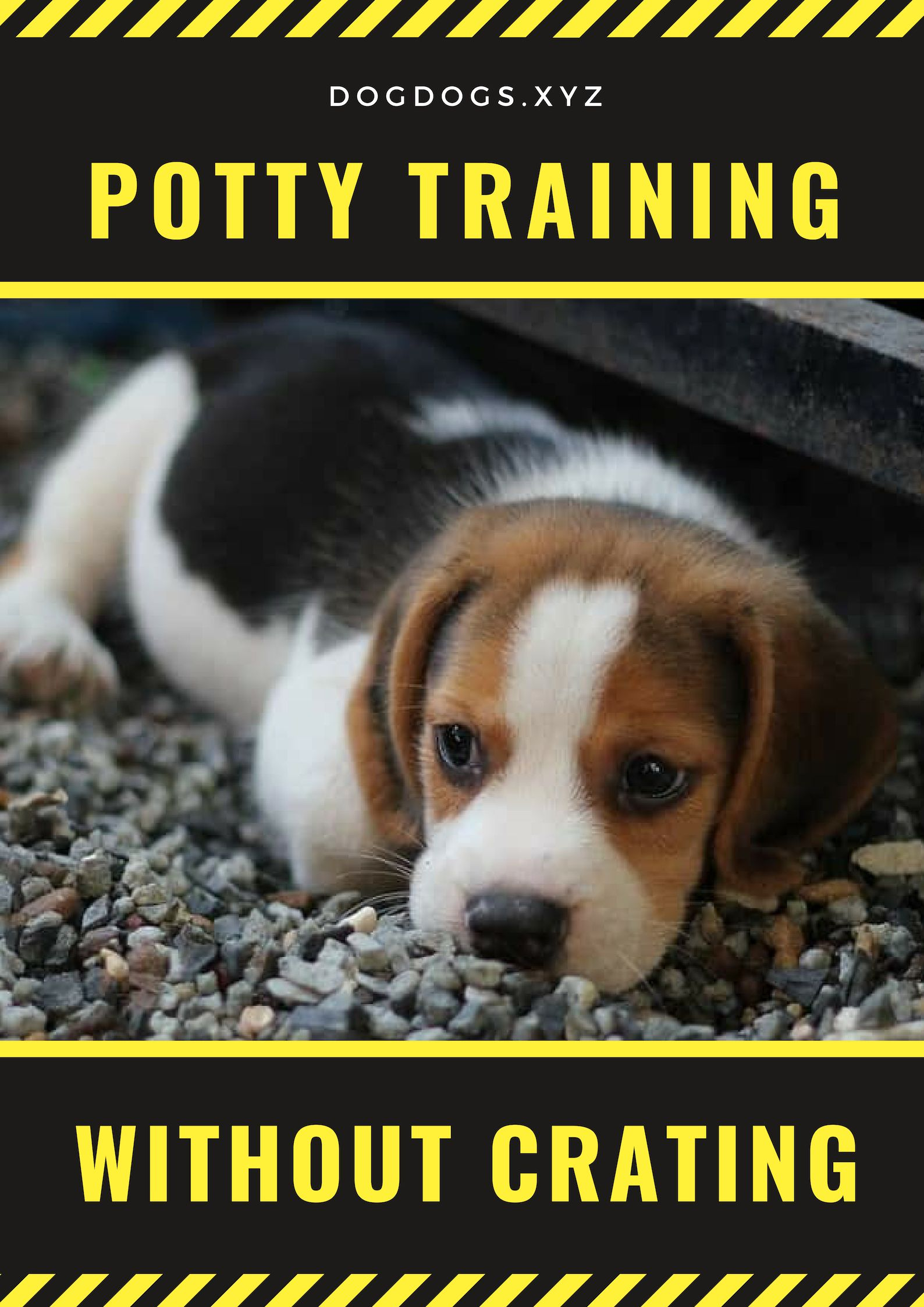 When Potty Training Puppies You Can Expect That There Would