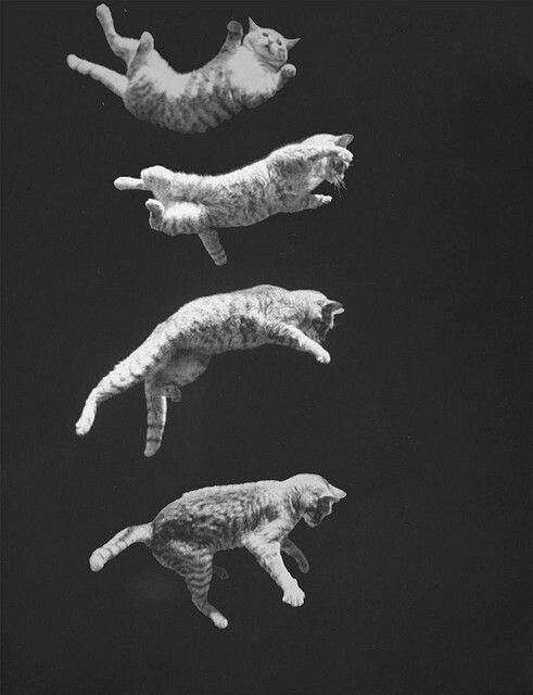 Falling kitty
