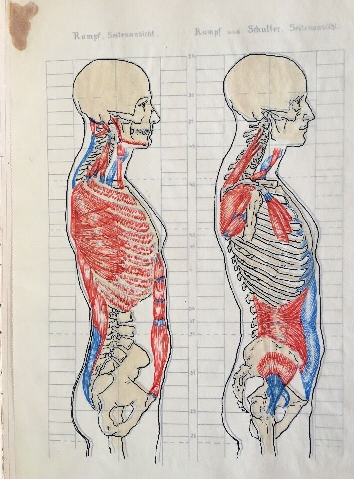 Anatomy Handwritten Medical Lecture Notes Drawings Merkheft Muskeln