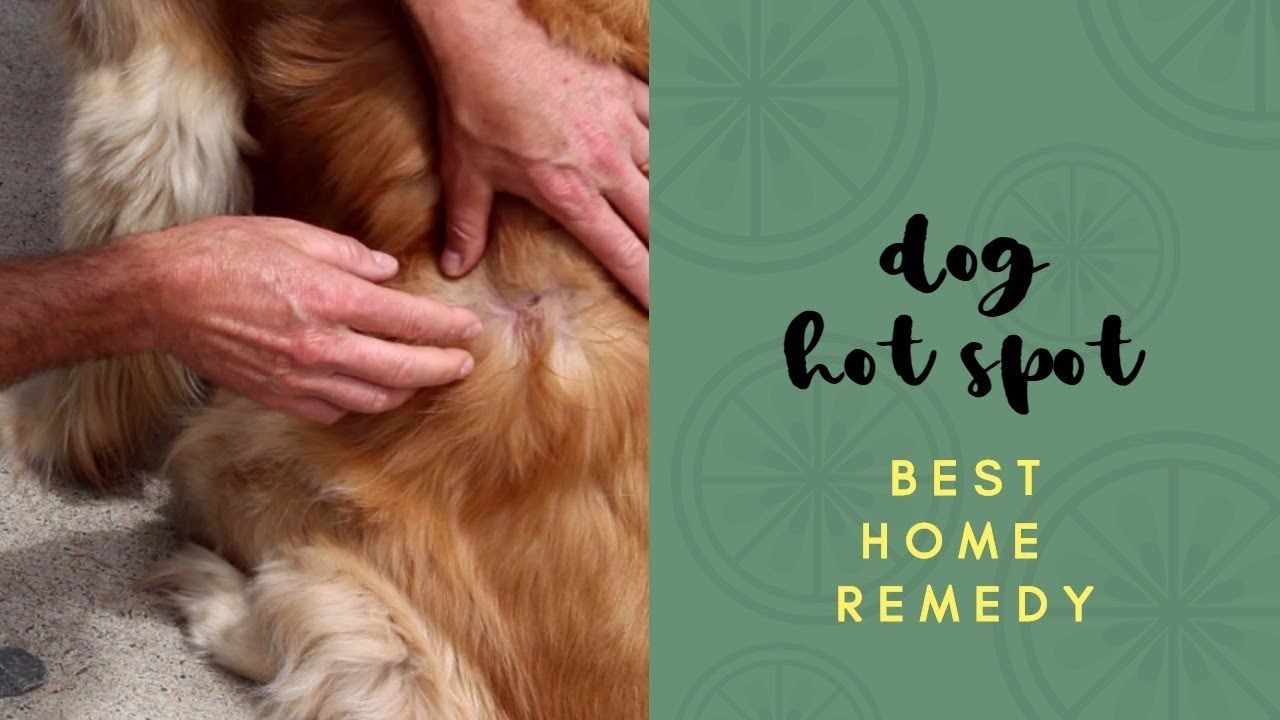 Best Dog Hot Spot Home Remedy Dog Hot Spots Best Dogs Dogs