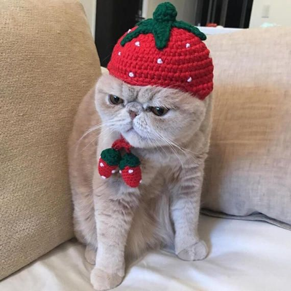 Handmade knitted strawberry hat for pet / for cats / small dogs / kawaii /pet costume / gift for cat / gift for dog