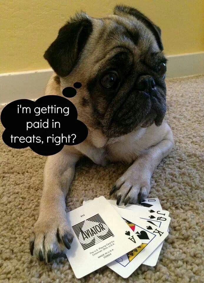 Omg Too Cute Winning Big Pugs Dogs Cute Pugs