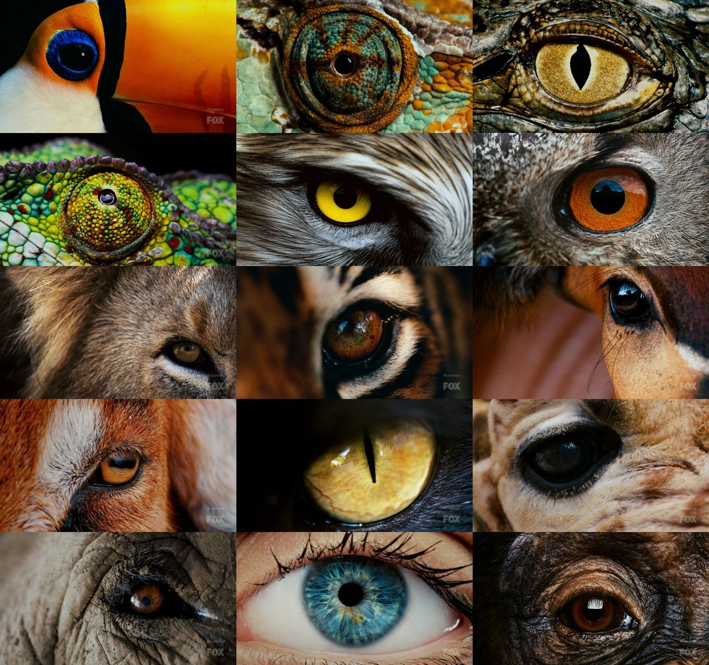 A collection of amazing-looking eyes from 15 different animals. | Animals,  Animal close up, Eye art