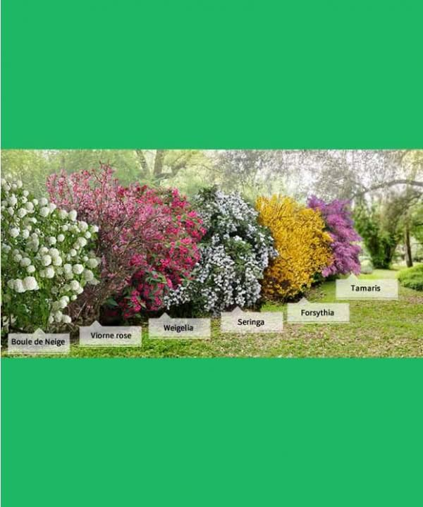 Collection 39 la haie des quatre saisons 39 6 arbustes 2 3 for Catalogue plantes jardin