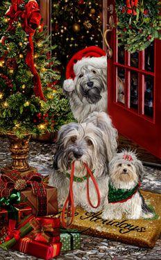 --Havanese Christmas Greetings