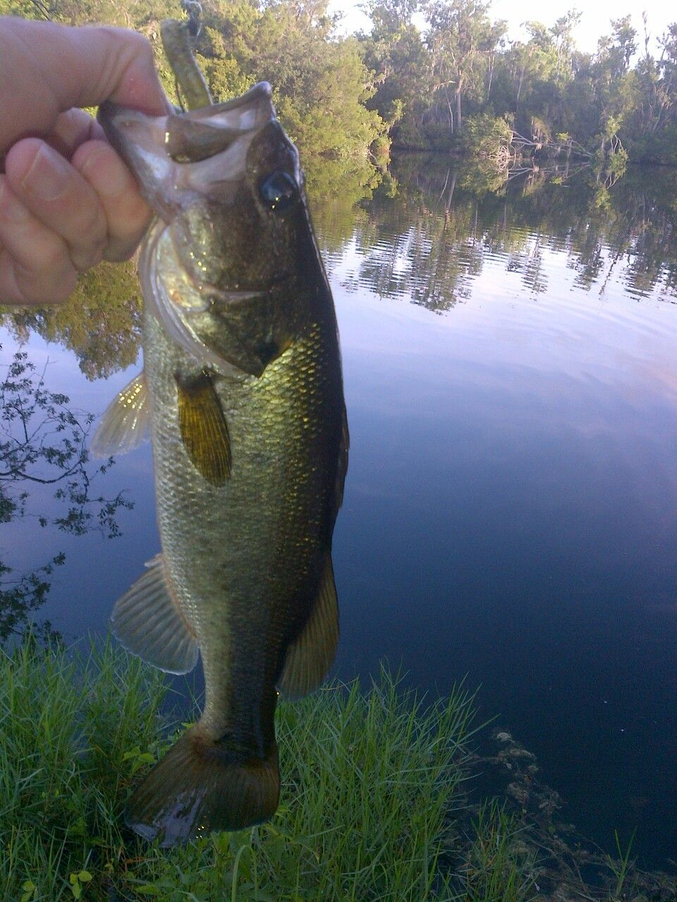 Calm and quiet...finesse fooled him Fish, Bass fishing