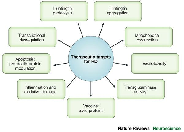 Downstream Targets For Therapeutics For Huntington S Disease Hd Huntington Disease Disease Awareness Disease