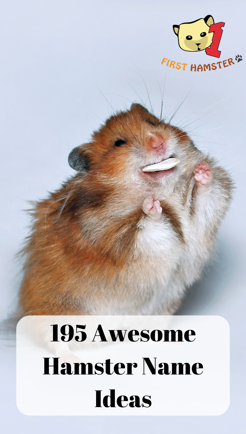 195 Perfectly Cute Hamster Names Male And Female