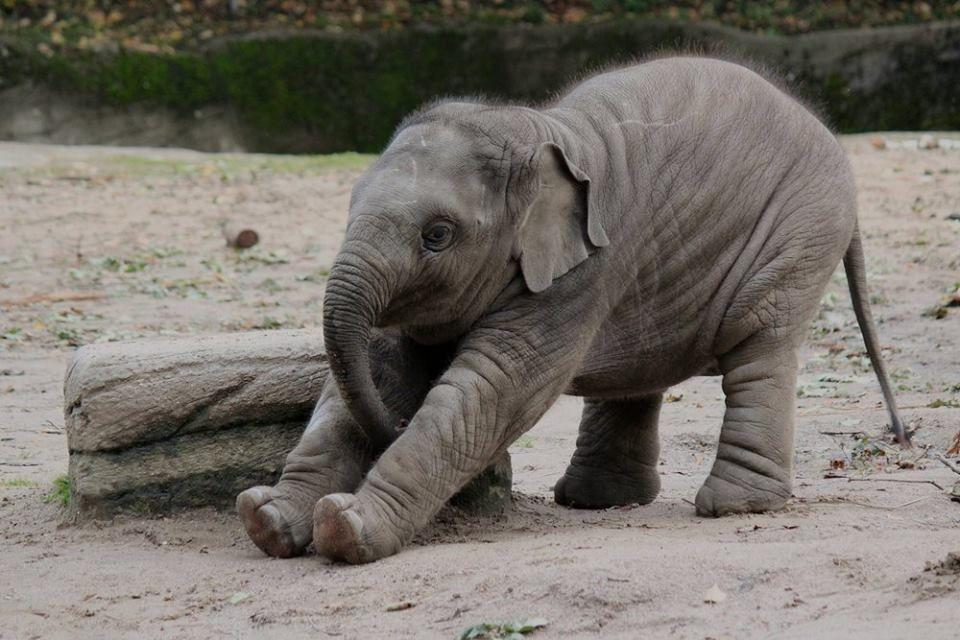 Хочется, слоны приколы картинки