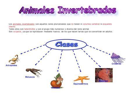 La Presentacion Los Animales Invertebrados Son Los Que No Tienen Un Esqueleto Interno Con Columna Vertebral Algunos Animales Invertebrados Anelidos Cnidario