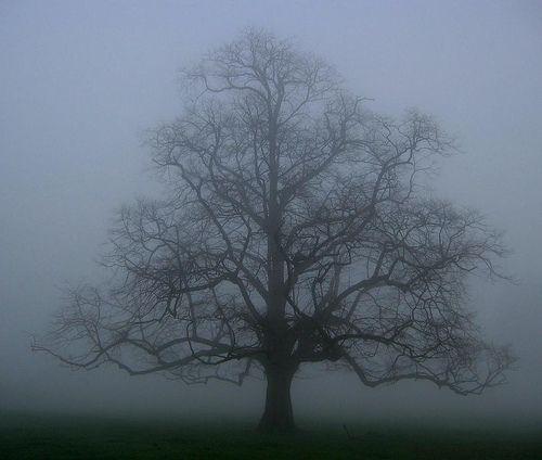 Mist The Oak Tree Mists Nature Tree Oak Tree