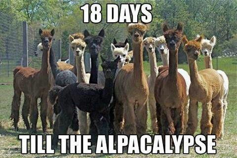 Alpacas Haha Alpaka Lustig Funny Shit