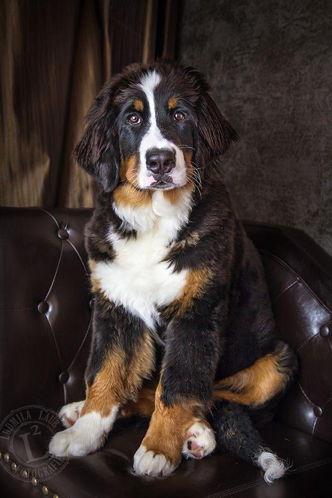 Sunny Von Bayern Niedliche Tierbabys Niedliche Hunde Hunde