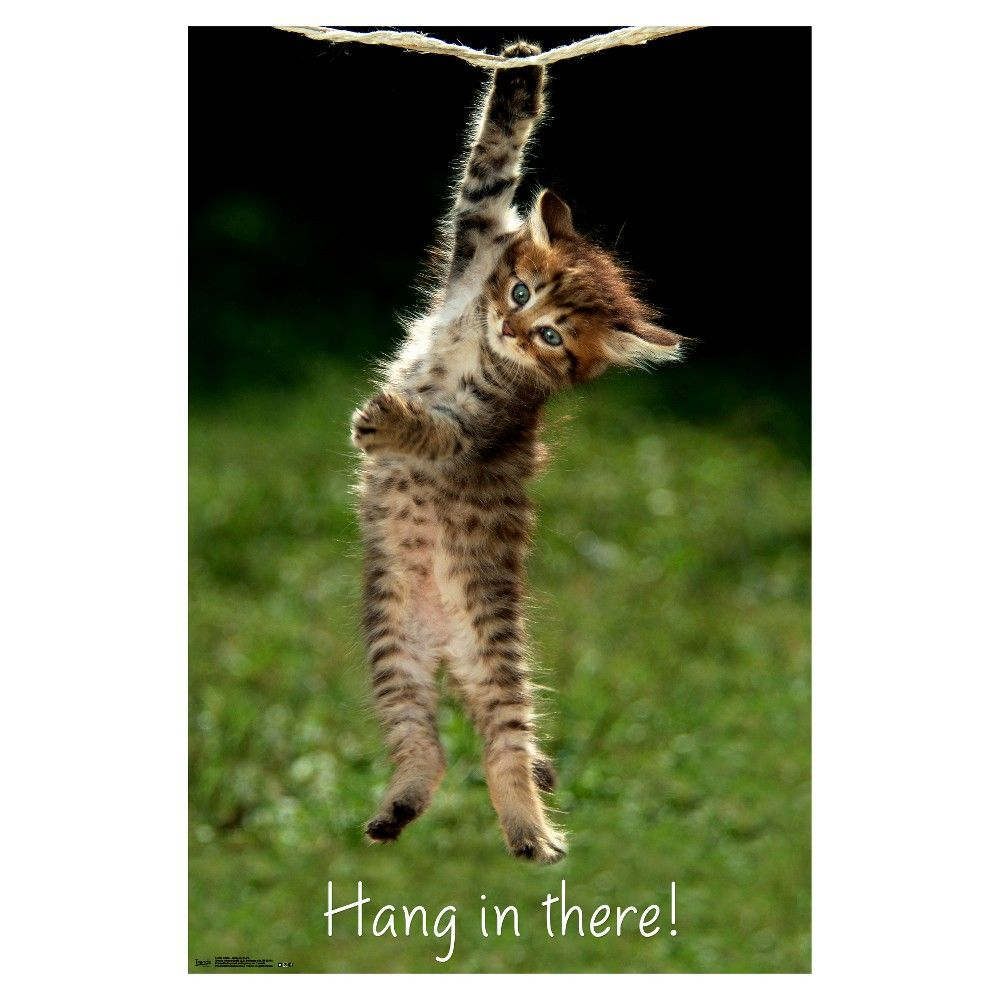 Unframed Wall Poster Print Trends International 34 X 1 25 X 1 25 Hang In There Cat Cat Posters Trends International