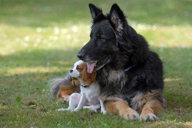Pin von linda rusk auf Dogs Hundefotos, Ausgestopftes