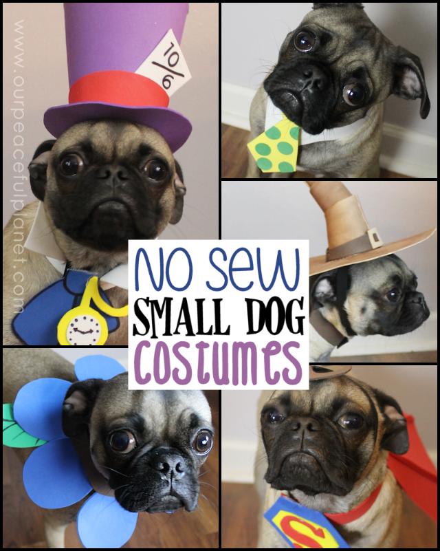Small Dog Halloween Costume & Patterns Dog halloween