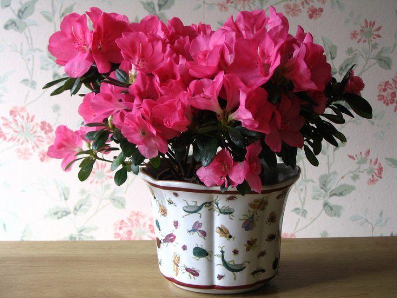 Полки для цветов своими руками фотогалерея гугл