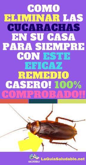 Como Acabar Con La Plaga De Cucarachas Chiquitas Las Cucarachas Vienen A Su Casa Sin Una Invitacion Y Pueden